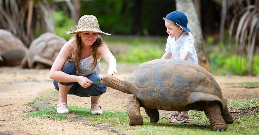 Mauritius Schildkröte Kinderferien